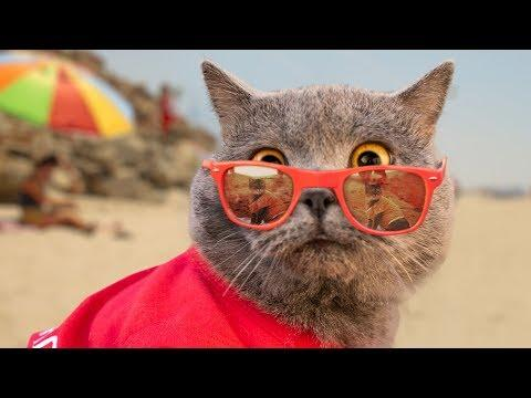 World's First Cat Lifeguard