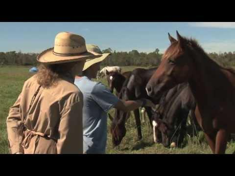 Students With Asperger's Interact With Horses