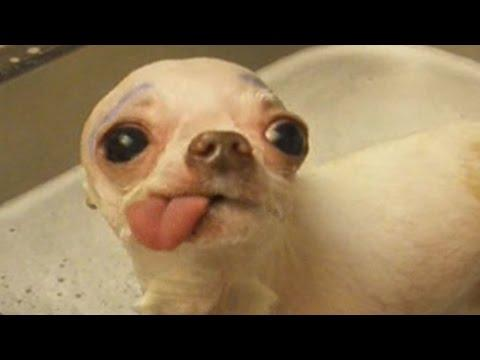 Awesome Animal Tongues: Compilation