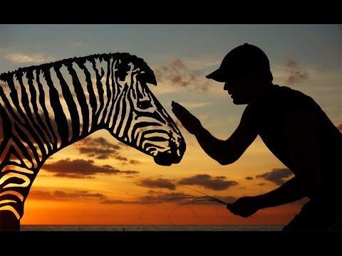 Sunset Selfies Zebra