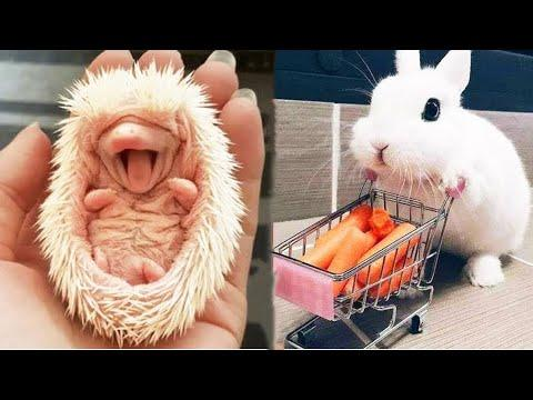 AWW SO CUTE! Cutest baby animals Videos Compilation Cute moment of the Animals - Cutest Animals #19