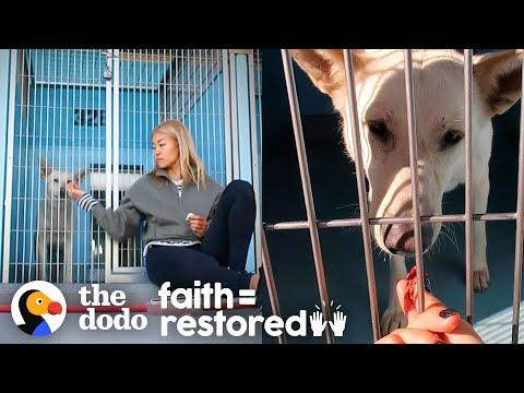 Scared Shelter Dog Is So Lucky She Met This Woman | The Dodo Faith = Restored