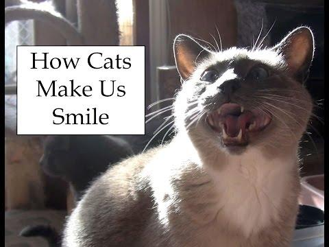 How Cats Make Us Smile