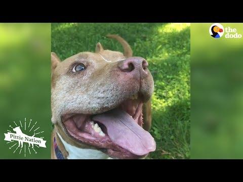 Pittie Who Spent Years Chained Up Loves New Life As A Cuddlebug  | The Dodo Pittie Nation