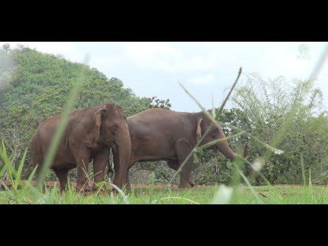 Blind Elephant Jokia Adopted By Her New Friend