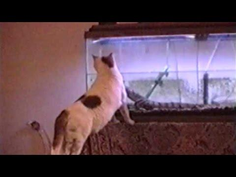 Startled Cats - Compilation
