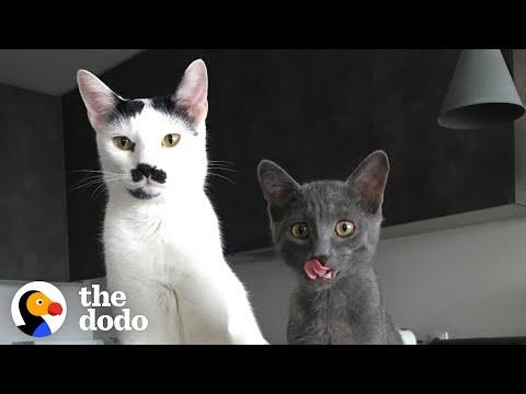 The Chaotic Life Of Charlot The Mustache Cat Video