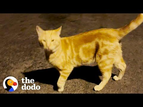 Friendly Stray Cat Gets An Uber Home #Video
