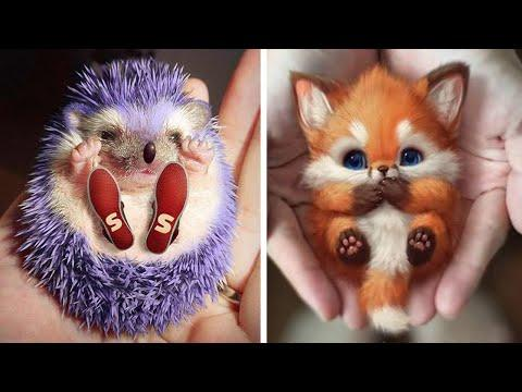 Cute baby animals Videos Compilation cutest moment of the animals - Soo Cute! #21