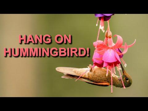 Photographing Hummingbirds of Colombia Video