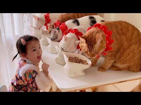 Little Girl And Her Sweet Cuddly Cats #Video
