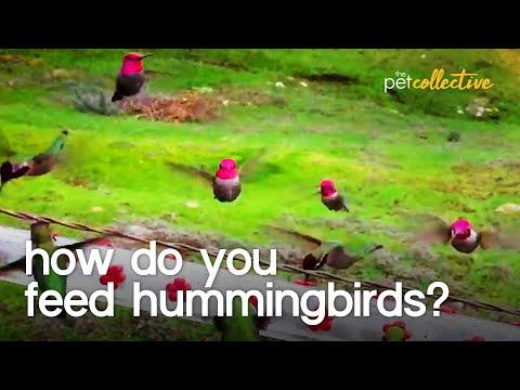 Hummingbirds Feed in Slow Motion Video