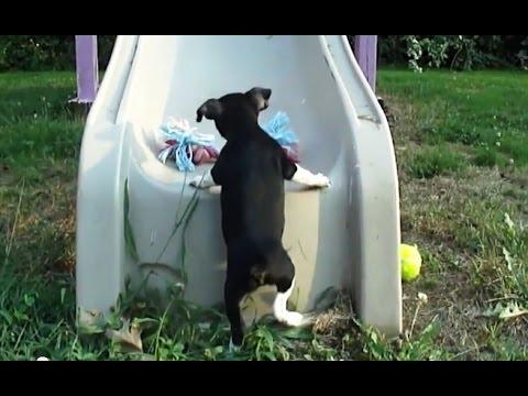 Puppies Trying To Climb Up The Slide Compilation