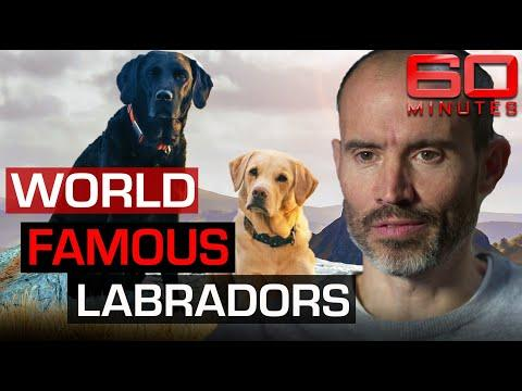 Meet Mabel and Olive: Andrew Cotter's world famous Labradors! Video.