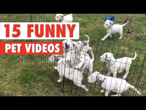 Very Funny Pet Video Compilation 2017