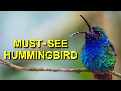 Hummingbirds You Must See in Colombia Video