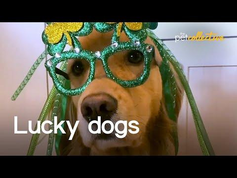 The World's Luckiest Dogs Video