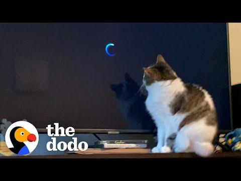 This Cat's Obsessed With One Movie | The Dodo Cat Crazy Video