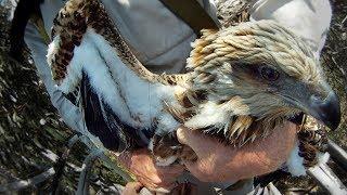 GoPro: Sea Eagle Rescue