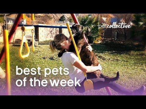 ✅Best Pets of the Week - PLAYGROUND PUP