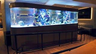 A Hockey-Themed Shark Tank For The San Jose Sharks | Tanked