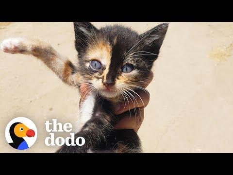Tiny Kitten Runs Out Of Bushes To Her New Mom Video