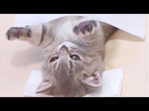 Little Kitten Enjoys Spa Session Video