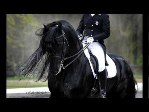 Friesian Stallion Alert 475 Sport!