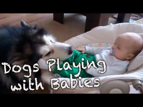 Dogs Playing With Babies Compilation