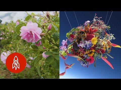4 Floral Stories