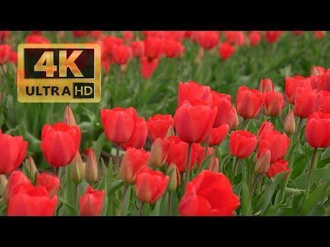 Skagit Spring 20190407 4K UHD