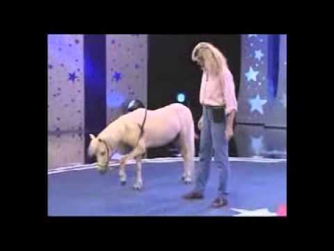 The World's Smartest Mini Horse - HD