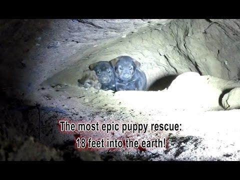 Hope For Paws - Epic Puppy Rescue - 18 Feet Into The Earth!!!