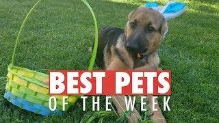 Best Pets of the Week | May 2018 Week 1