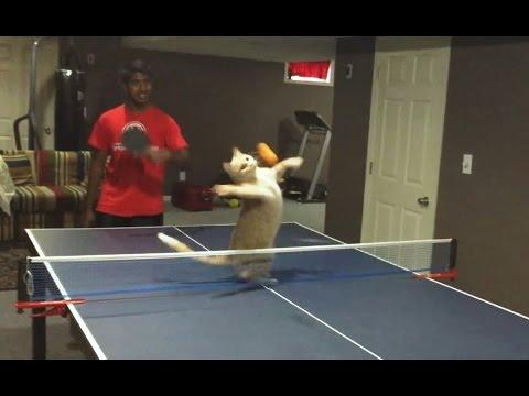 Cats Playing Ping Pong Compilation