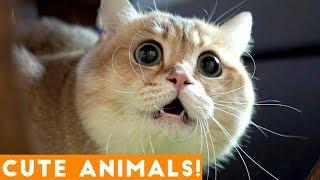 Ultimate Cute Animal Compilation January 2018 | Funny Pet Videos