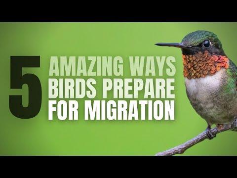 5 Amazing Ways How Birds Prepare for Migration   North America #Video