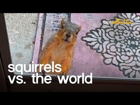 Squirrels vs The World Video