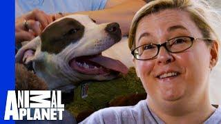 PJ The Adorable Puppy Finds The Loving Home He Deserves | Pit Bulls & Parolees