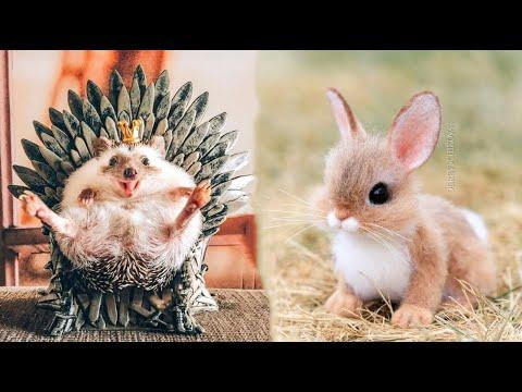 Cute baby animals Videos Compilation Cute moment of the animals - Cutest Animals #8