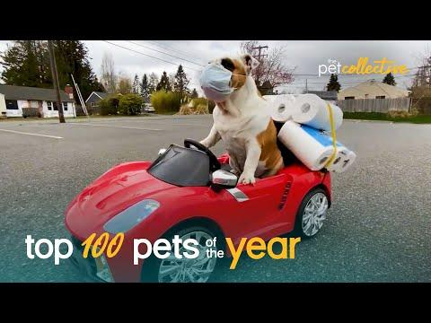 Top 100 Best Pets of the Year Video (2020)