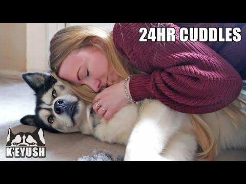 Hugging My Husky Every Time I See Him for 24 Hours! #Video