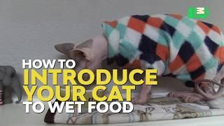 How To Introduce Your Cat To Wet Food | Cat vs. Dog