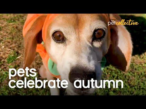 Pets Celebrate The Seasons Changing Video