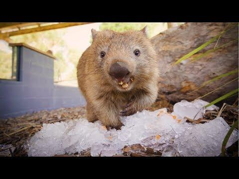 Cutest Aussie Animals cool off during Australian Summer