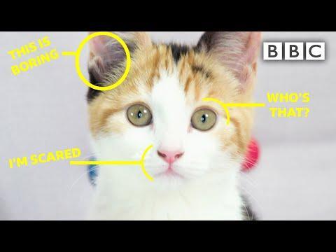 Understanding Your Cat Video... Is That Even Possible?