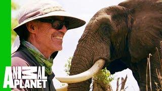 Jabu The Elephant Gets A Life-Changing Leg Brace | Extended Cut | Dodo Heroes