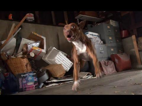 Hope For Paws: Pit Bull Rescue Like You Have Never Seen Before!