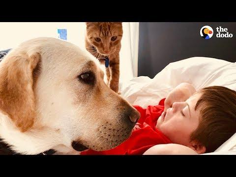 This Dog Loves Making His Favorite Boy Happy  | The Dodo