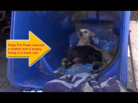 Hope For Paws Rescues A Mom And A Puppy Living In A Trash Can.
